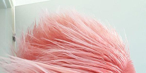 17-hairlab-coloreC823F7FD-3E3E-FE51-8D8E-EDC4F0E7818D.jpg